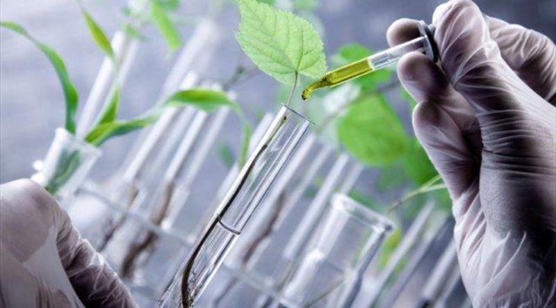 Contoh Bioteknologi