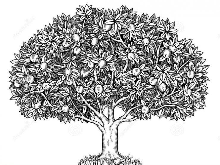 cara menggunakan tes pohon wartegg